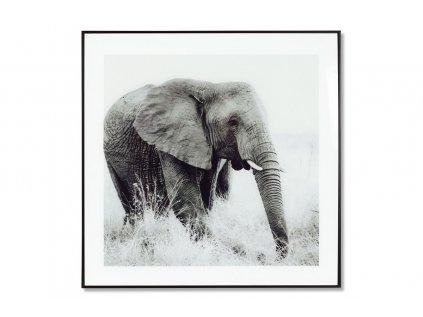 Obraz skleněný 50x50 cm HS059