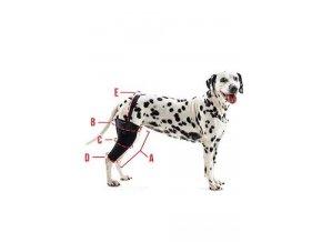 Bandáž na koleno pro psa KRUUSE Rehab XL Levá