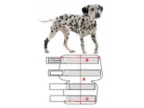 Bandáž na hlezno pro psa KRUUSE Rehab L
