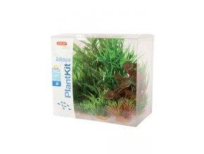 Rostliny akvarijní JALAYA 2 sada Zolux