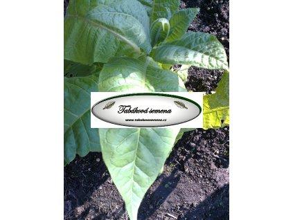 Tabák Simox - 100 semen