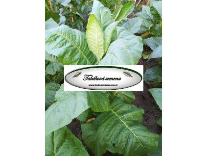 Tabák Burley 21 - 100 semen