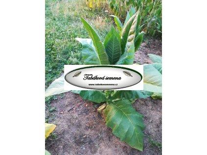 Tabák Pennbel 69 - 100 semen