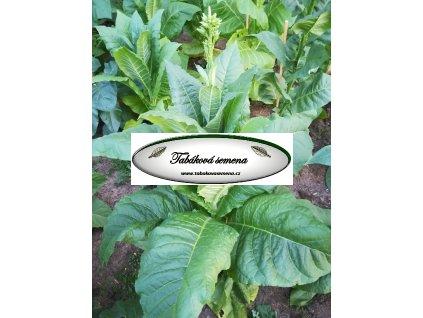 Tabák Maryland 609 - 100 semen