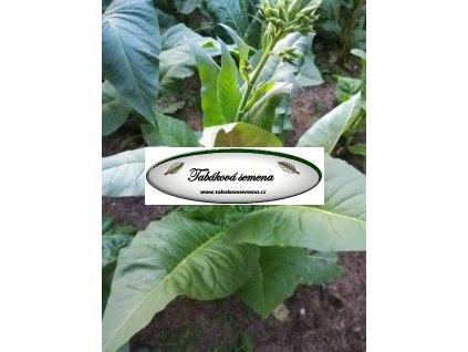 Tabák Pergeu Brazil - 100 semen