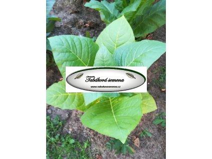 Tabák Kentucky 17 - 100 semen