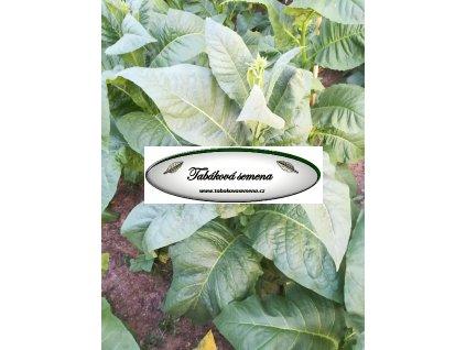 Tabák Kentucky 190 - 100 semen