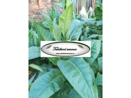 Tabák Dominican Republic - 100 semen