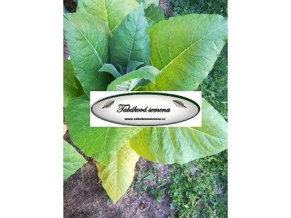 Tabák Virginia 509 - 100 semen
