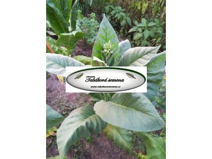 Tabák Indian Black - 100 semen