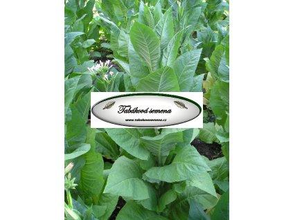 Tabák African Red - 100 semen