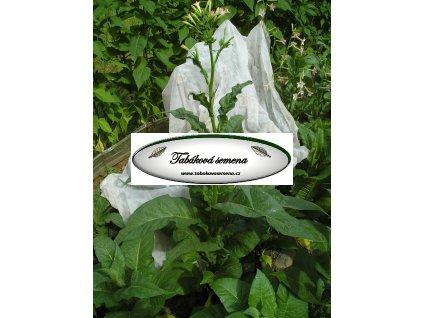 Tabák Banana Leaf - 100 semen