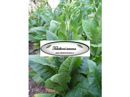 Tabák Catterton - 100 semen