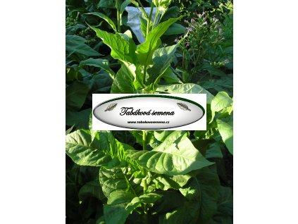 Tabák Cuba 4 - 100 semen