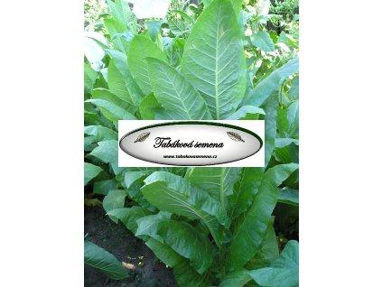 Tabák Kentucky(KY) 15 - 100 semen