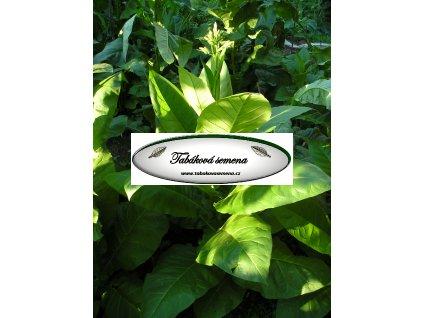 Tabák Yellow Prior - 100 semen