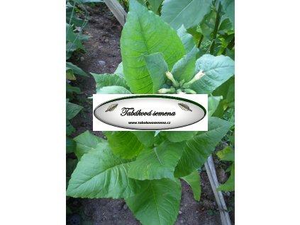 Tabák Kumanovo - 100 semen