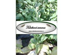 Tabák Kentucky  8635 - 100 semen