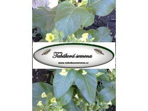 Tabák Sacred Wyandot - 100 semen