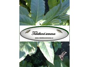 Tabák Shirey - 100 semen