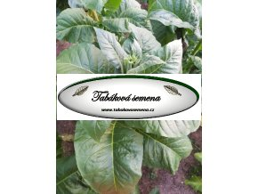 Tabák Gold Leaf 939 - 100 semen