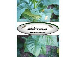 Tabák Vuelta Abajo - 100 semen