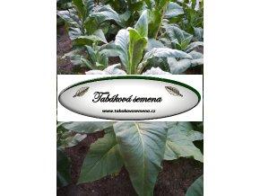 Tabák Gold Dollar - 100 semen