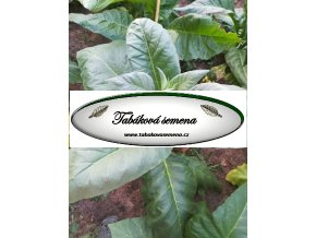 Tabák Madole - 100 semen
