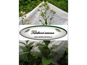 Tabák Costa Rica - 100 semen