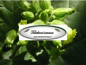 Tabák Hopi - 100 semen