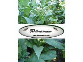 Tabák Pennsylvania red - 100 semen