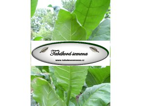Tabák Sherazi - 100 semen