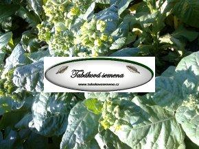 Tabák Aztec Rustica - 100 semen