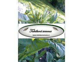 Tabák Florida Sumatra - 100 semen