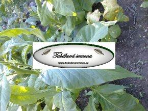 Tabák Habano 2000 - 100 semen