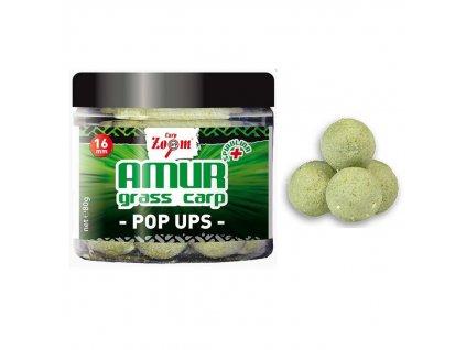 amur pop up