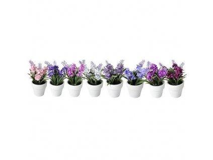 Levandule sukulent, Mix MagicHome, 15-20 cm, kvetináč - papier, sellbox, 8 ks  + praktický Darček k objednávke