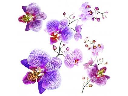 SS3859 Samolepicí dekorace Orchidej, 30 x 30 cm