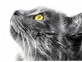 1dílná fototapeta CAT, 160 x 115 cm