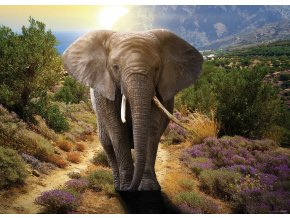AG Design 1 dílná fototapeta ELEPHANT FTNM  2671, 160 x 110 cm vlies