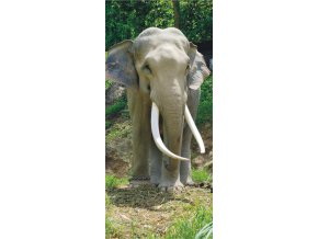 AG Design 1 dílná fototapeta ELEPHANT FTNV 2850, 90 x 202 cm vlies