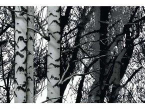 Samolepicí fólie d-c-fix břízy 2003197, ozdobné vzory, šíře 45 cm
