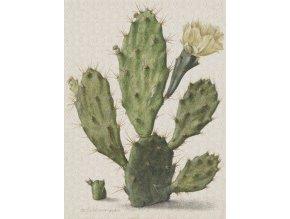 KOL8013 Luxusní fototapeta, Blooming Cactus, 4dílná