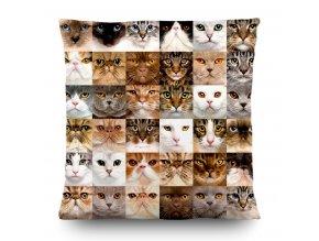 Dekorativní polštářek CN3615 Cats 45 x 45 cm