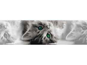 WB8217 Samolepicí bordura, šíře 14 cm Kočka, 14 x 500 cm