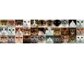 WB8232 Samolepicí bordura, šíře 14 cm Cats, 14 x 500 cm