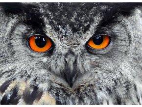 AG Design 1 dílná fototapeta OWL FTNM 2646, 160 x 110 cm vlies