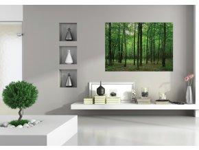 AG Design 1 dílná fototapeta FOREST FTNM 2656, 160 x 110 cm vlies