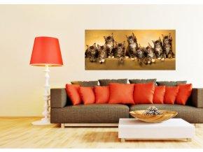 AG Design 1 dílná fototapeta CATS FTNH 2704, 202 x 90 cm vlies