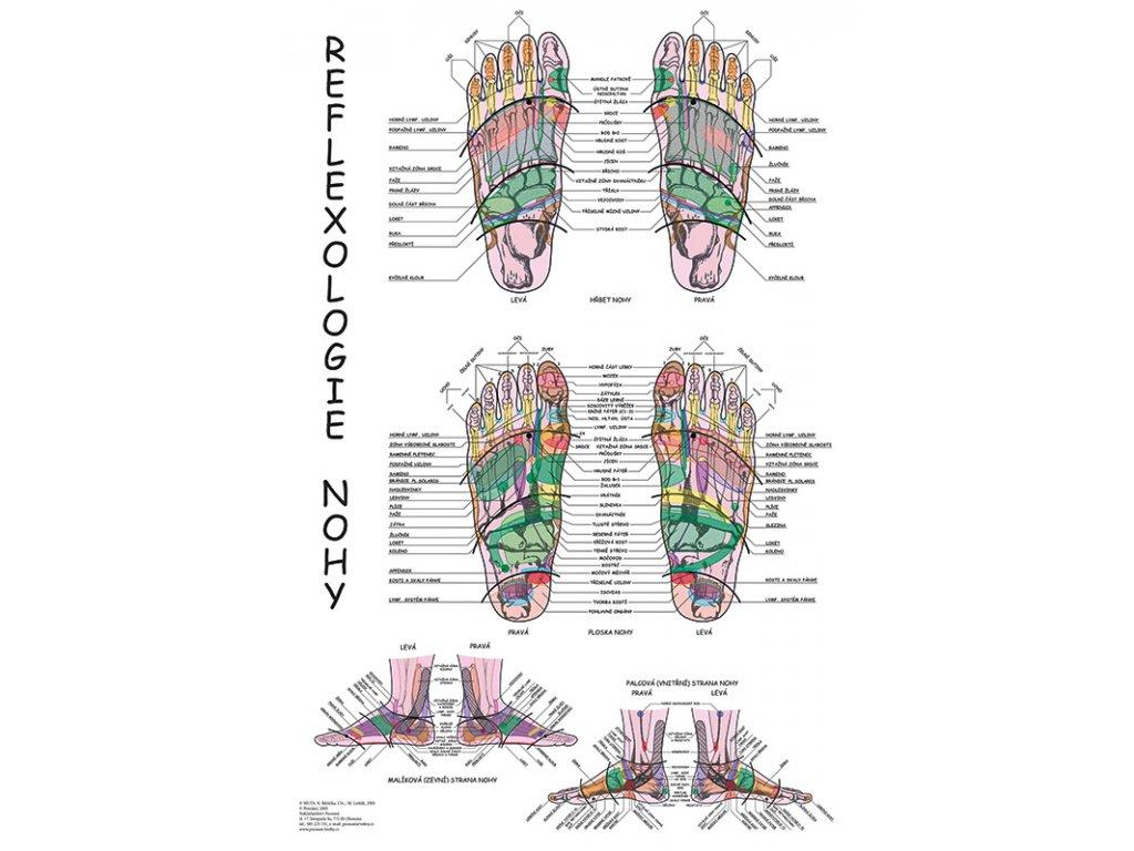 Reflexologie v800